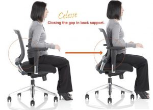 lumbar support for office chair celesse